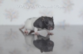 Ratz Fatz Babsi